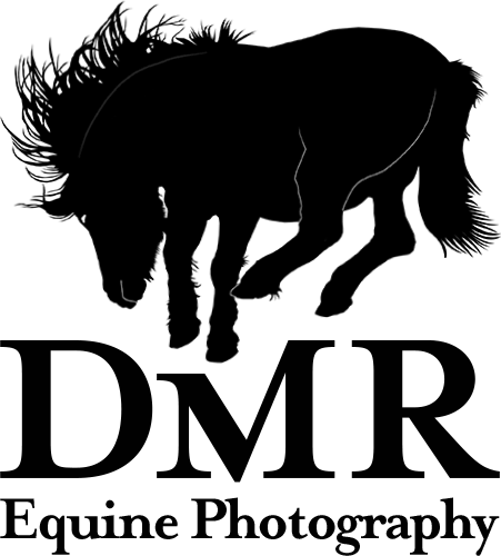 DMR Equine Photograpy